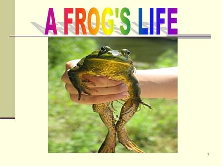 1. 2 There are many types of frogs. Some are very beautiful………
