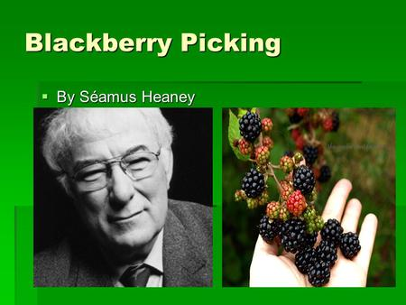 Blackberry Picking  By Séamus Heaney (1939-2013).