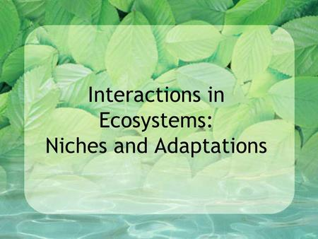 Interactions in Ecosystems: Niches and Adaptations.