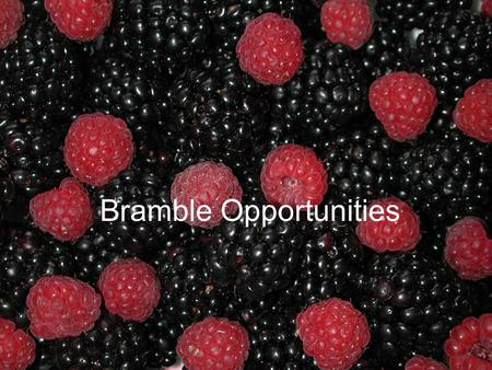 Bramble Opportunities. Bramble industry in NC: -100 acres 1996 -150 acres 2002 (approx) -90% blackberries -Arkansas varieties.