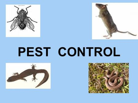 "PEST CONTROL. Pest Control: - No matter how clean one keeps one's surroundings you cannot avoid the ""uninvited guests"" – The Pests. The Hospital (or)"