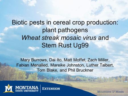 Biotic pests in cereal crop production: plant pathogens Wheat streak mosaic virus and Stem Rust Ug99 Mary Burrows, Dai Ito, Matt Moffet, Zach Miller, Fabian.