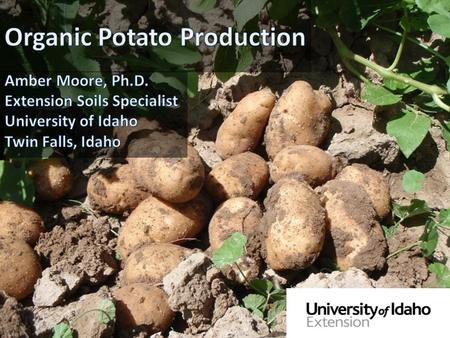 Similar to conventional in many ways Organic potato needs the same nutrients as a conventional potato Physiologically the same.