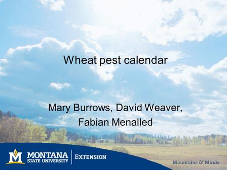 Wheat pest calendar Mary Burrows, David Weaver, Fabian Menalled.