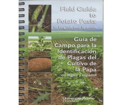 The IPM Manual—What is it? Pocket-sized Outlines scouting plan for potatoes Emphasizes economically damaging pests and new pests in potatoes grown in.
