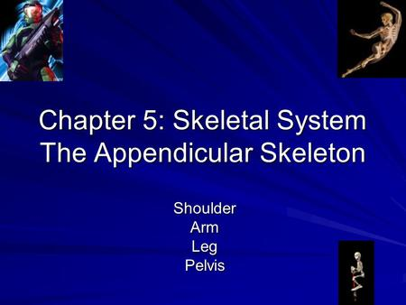 Chapter 5: Skeletal System The Appendicular Skeleton ShoulderArmLegPelvis.