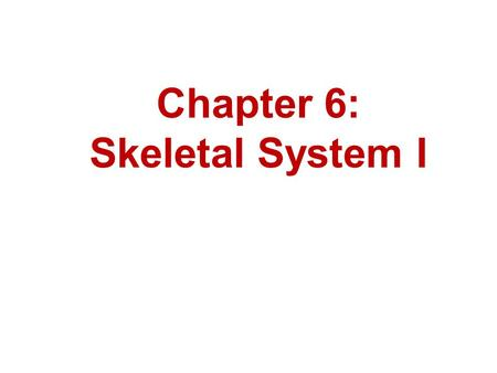 Chapter 6: Skeletal System I. Bernard Siegfried Albinus 1697 – 1770 Famous for his drawings in the work entitled Tables of the Skeleton and Muscles of.