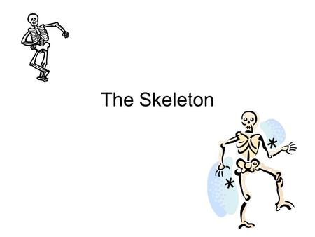 The Skeleton. The Head Cranium – Also known as the skull. Protects the brain. Mandible – Jaw bone, holds the teeth in place. Works with the upper mouth.