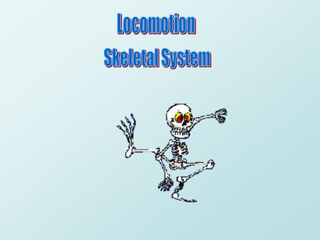 Locomotion Skeletal System.