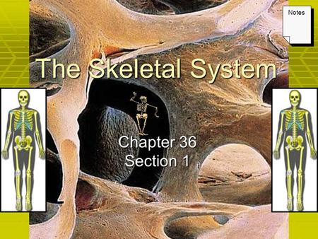 The Skeletal System Chapter 36 Section 1 Notes. Keys Lecture Outline – The Skeletal System PowerPoint Notes textbook questions.