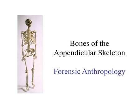 Bones of the Appendicular Skeleton Forensic Anthropology.