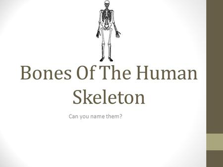 Bones Of The Human Skeleton Can you name them?. Name The Bone cranium.
