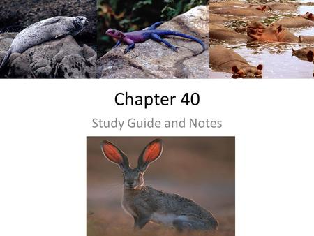 Chapter 40 Study Guide and Notes. 1. & 2. How has natural selection/evolution influenced animal body SIZE and FORM? Physical laws – constrain what natural.