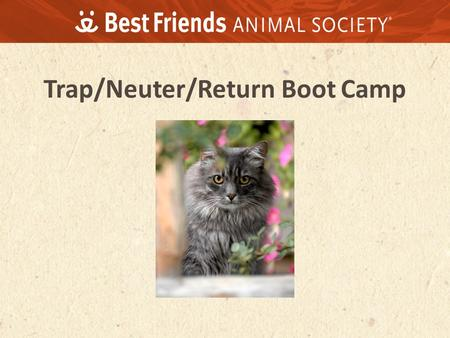 Trap/Neuter/Return Boot Camp. We can build a better world through kindness to animals.
