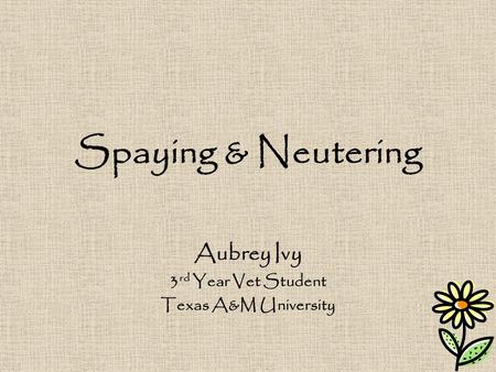 Spaying & Neutering Aubrey Ivy 3 rd Year Vet Student Texas A&M University.