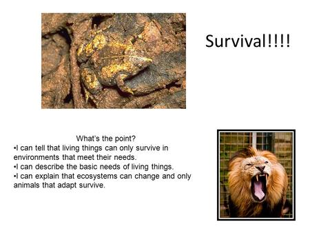 Survival!!!! What's the point?