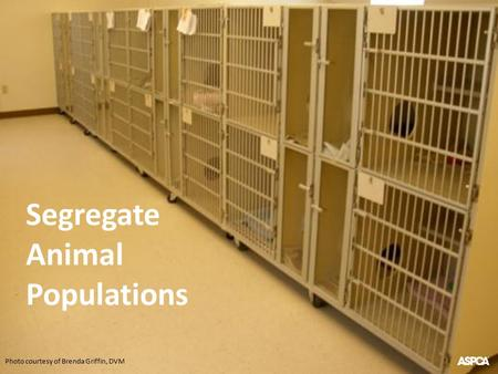 Photo courtesy of Brenda Griffin, DVM Segregate Animal Populations.