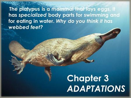 The platypus is a mammal that lays eggs. It has specialized body parts for swimming and for eating in water. Why do you think it has webbed feet? Chapter.