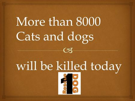 More than 8000 Cats and dogs will be killed today.
