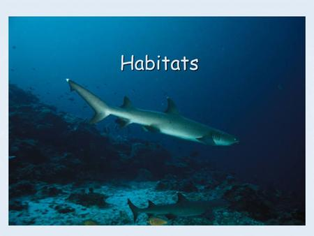 Habitats. What is a habitat ? A habitat is the place where living things live. A habitat is the place where living things live. It is more than just.
