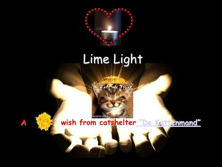 "Lime Light A wish from catshelter ""De Kattenmand"" ""De Kattenmand"" ""De Kattenmand"""