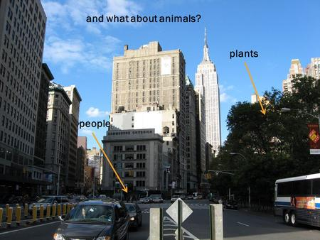 people plants and what about animals? A __________ is the place where living things live and grow together. HABITAT people plants animals B A A I T T.