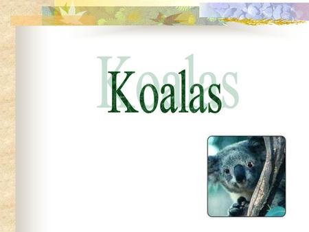 An essay about koalass behavior habitat and the food they eat