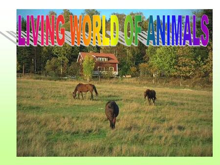 LIVING WORLD OF ANIMALS