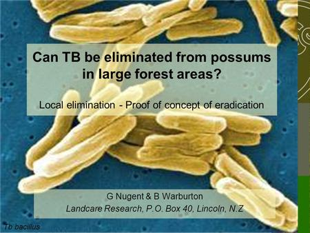 Tb bacillus Can TB be eliminated from possums in large forest areas? Local elimination - Proof of concept of eradication G Nugent & B Warburton Landcare.