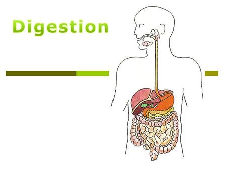 How do we get from this… …to this. Digestive System Parts  Mouth – chewing, lubrication, digestion  Pharynx and Esophagus - swallowing  Stomach -