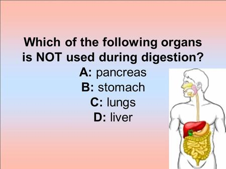 Which of the following organs is NOT used during digestion? A: pancreas B: stomach C: lungs D: liver.