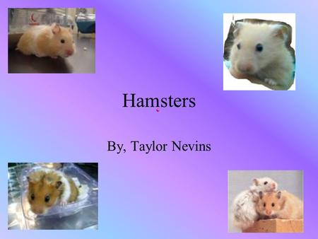 Hamsters By, Taylor Nevins. Hamsters: Our cuddly, furry friends! Syrian hamsters Mesocricetus auratus: Long-hair, Short-hair, Black Bear, Honey Bear,