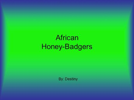 African Honey-Badgers By: Destiny. Habitat Lives in holes that a bear can fit in Live in the grasslands and forests.