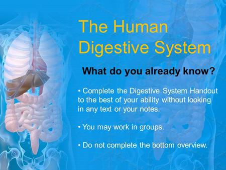 The Human Digestive System What do you already know? Complete the Digestive System Handout to the best of your ability without looking in any text or your.