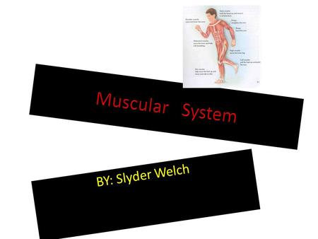 BY: Slyder Welch. Made up of? Important because? Holds organs in place. Holds the bones together, so that you can move. Helps you chew food. Pumps blood.