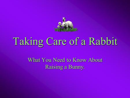 Taking Care of a Rabbit What You Need to Know About Raising a Bunny.