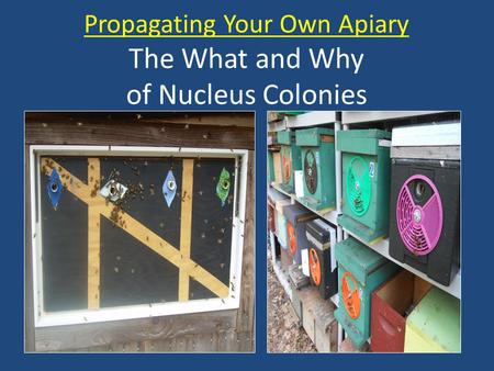 Propagating Your Own Apiary The What and Why of Nucleus Colonies.