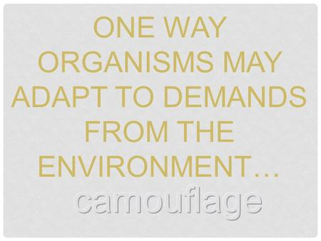 ONE WAY ORGANISMS MAY ADAPT TO DEMANDS FROM THE ENVIRONMENT…