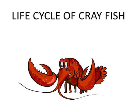LIFE CYCLE OF CRAY FISH. Blue Crayfish Rusty Crayfish.