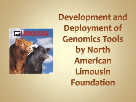 Develop 50K prediction equation suitable for estimation of Molecular Breeding Values (MBV) for Limousin and LimFlex (hybrid) animals Use 50K imputed genotypes.