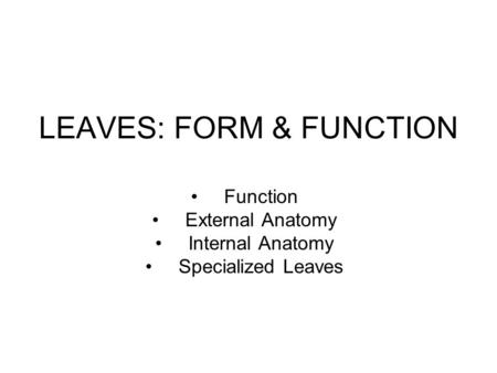 LEAVES: FORM & FUNCTION