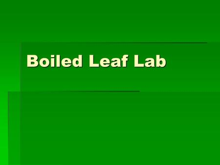 Boiled Leaf Lab. Preparation:  Cut 2 one inch square pieces of thick cardboard (like cereal box)  Clip the two pieces of cardboard to a leaf still growing.