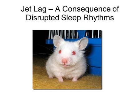 Jet Lag – A Consequence of Disrupted Sleep Rhythms.