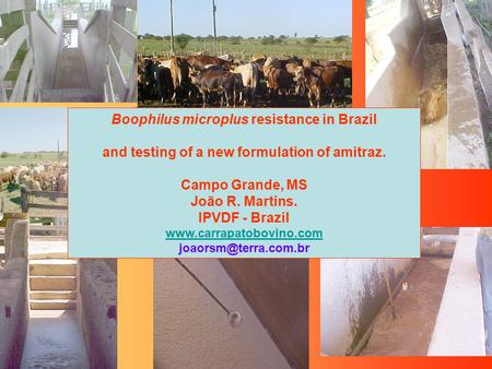 Boophilus microplus resistance in Brazil and testing of a new formulation of amitraz. Campo Grande, MS João R. Martins. IPVDF - Brazil www.carrapatobovino.com.