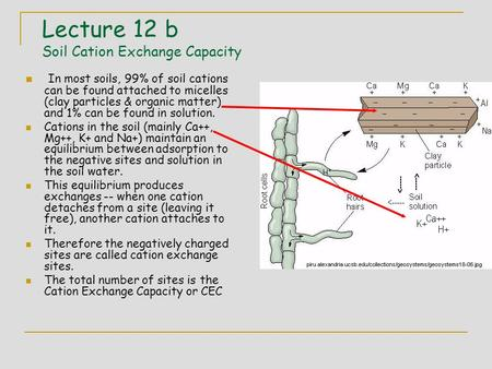 Lecture 12 b Soil Cation Exchange Capacity In most soils, 99% of soil cations can be found attached to micelles (clay particles & organic matter) and 1%