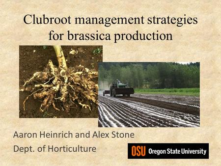 Clubroot management strategies for brassica production Aaron Heinrich and Alex Stone Dept. of Horticulture.