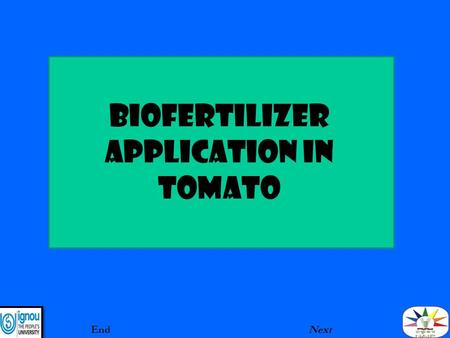 BIOFERTILIZER aPPLICATION IN TOMATO EndNext. INTRODUCTION Biofertilizers are applied as seed coating, seedling root dip and soil application method. The.
