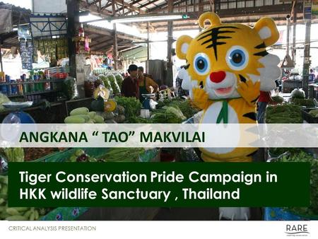 "ANGKANA "" TAO"" MAKVILAI Tiger Conservation Pride Campaign in HKK wildlife Sanctuary, Thailand CRITICAL ANALYSIS PRESENTATION."