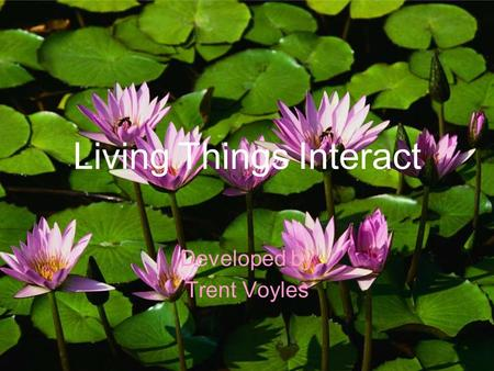 Living Things Interact Developed by Trent Voyles.