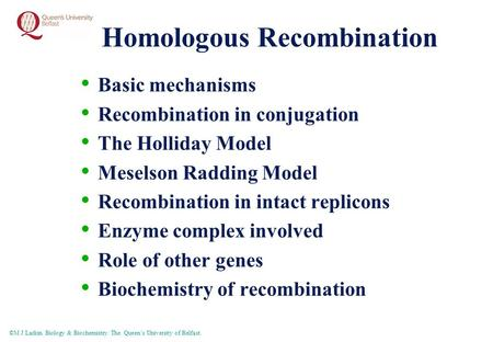 ©M J Larkin Biology & Biochemistry. The Queen's University of Belfast. Homologous Recombination Basic mechanisms Recombination in conjugation The Holliday.